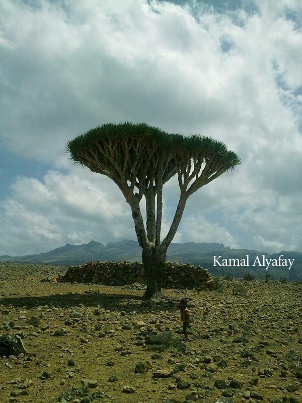 تفاصيل النهار في عالم خيالي جدا - في جزيرة سقطرى   مايو 2013 م